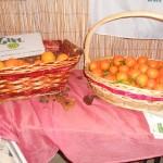 Ponti Pialesi - Mostra dei Presepi 2012 (Angolo Solidale ARANCE GOEL BIO)